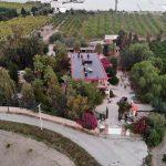 Международный бизнес в Турции – цитрусовый сад у морского побережья