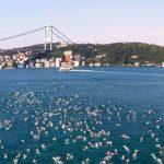 Редомициляция компании в Гибралтар: когда может понадобиться,  плюсы решения, тонкости процесса