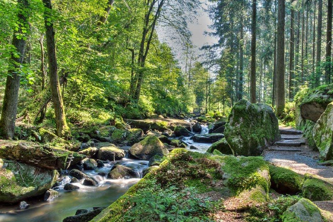 Изучаем национальные парки Германии после переезда на ПМЖ