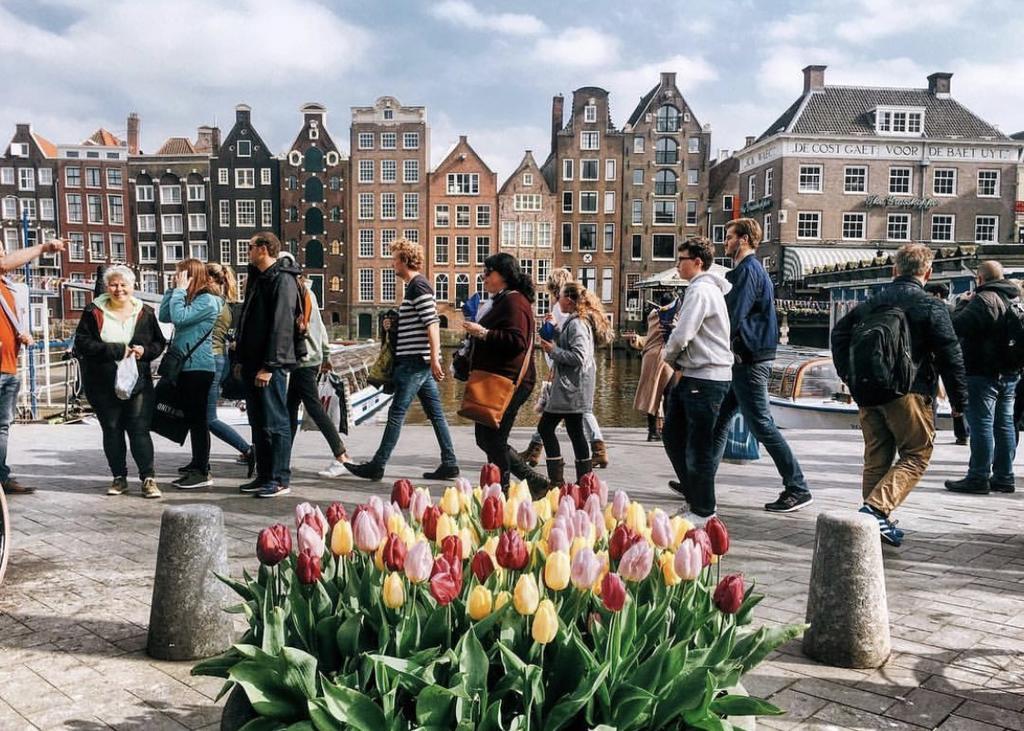 бизнес в Нидерландах через стартап визу